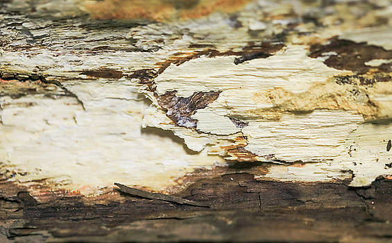Abstract from inside of the bark of tree by Hyuntae Kim