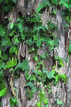 Tito - Abstract Ivy