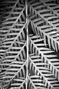 Marilyn Hunt - Abstract Leaves