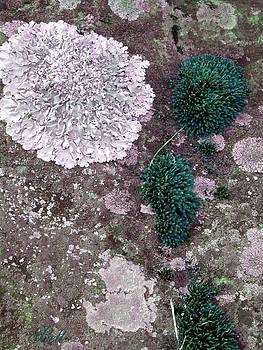 Christine Belt - Abstract Lichen