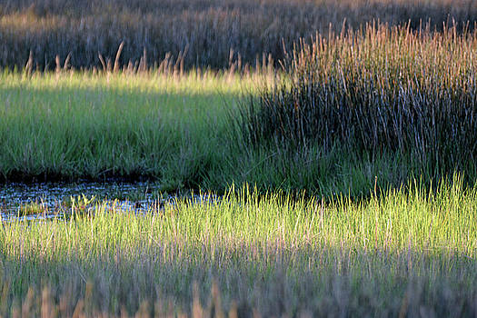 Abstract Marsh Grasses by Bruce Gourley