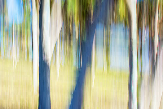 Abstract Moving Trees 30 by Gene Norris