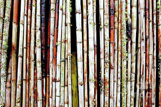 Abstract Nature Bamboo Shoots Photo 806 by Ricardos Creations