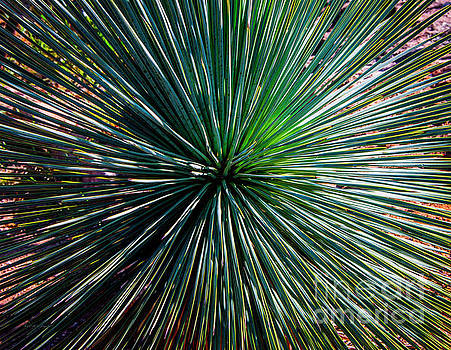 Abstract Nature Desert Cactus Photo 207 Blue Green by Ricardos Creations