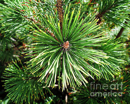 Abstract Nature Green Pine Tree Macro Photo 210  by Ricardos Creations