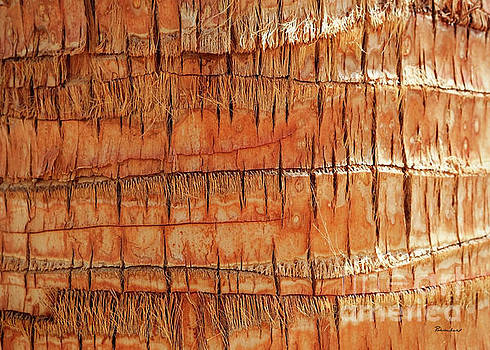 Abstract Nature Palm Tree Bark 704 Orange by Ricardos Creations