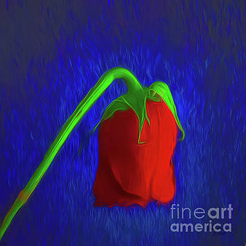 Abstract Of Red Rose  ... by Chuck Caramella
