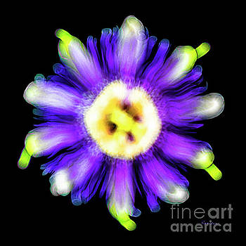 Ricardos Creations - Abstract Passion Flower in Violet Blue and Green 002a