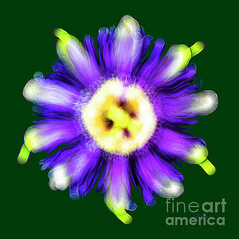 Ricardos Creations - Abstract Passion Flower in Violet Blue and Green 002g