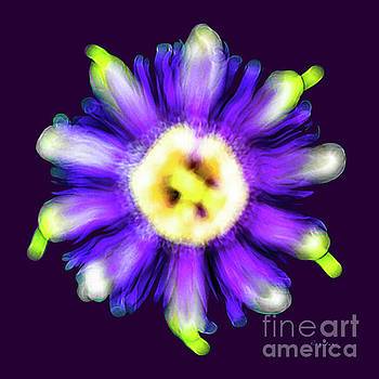 Ricardos Creations - Abstract Passion Flower in Violet Blue and Green 002p