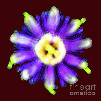 Ricardos Creations - Abstract Passion Flower in Violet Blue and Green 002r