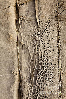 Abstract Perforated Rock by Sharon Foelz