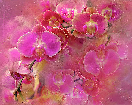 Abstract Pink Orchids by Judi Saunders