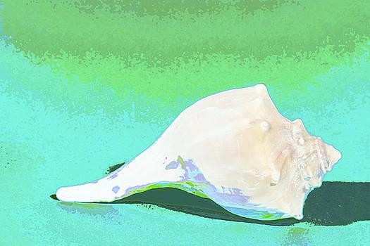 Abstract Shell by Karen Fowler