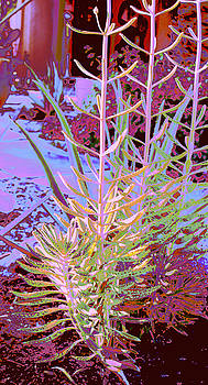 Abstract Succulent 6 by M Diane Bonaparte