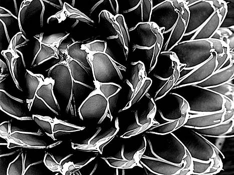 Abstract Succulent by Ranjini Kandasamy