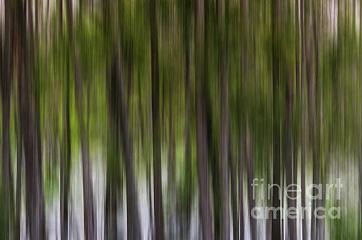 Abstract trees Murfree Spring Wetlands by Jeffery Johnson