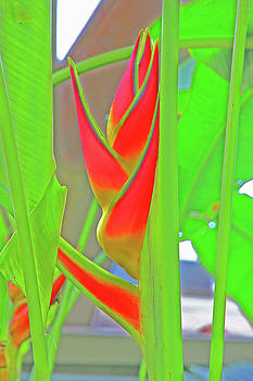 Abstract Tropical Flowers and Leaves Greens Reds Angles  2 10232017 Colorado by David Frederick
