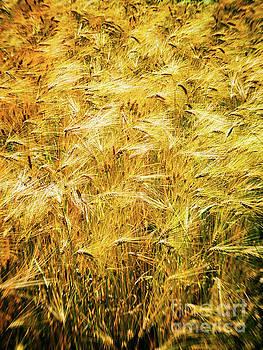Abstract wheat by Silvia Ganora