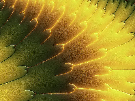 Abstracting Information From A Sunflower by Georgiana Romanovna