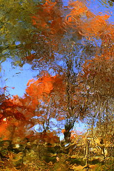 Abstracts of Autumn Canopies 1 by Charles Shedd