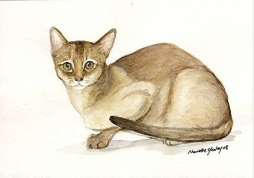 Absyssinian Cat by Charlotte Yealey