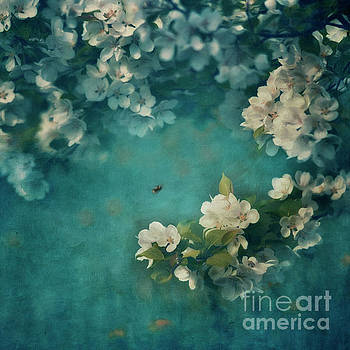 Abundance  by Priska Wettstein