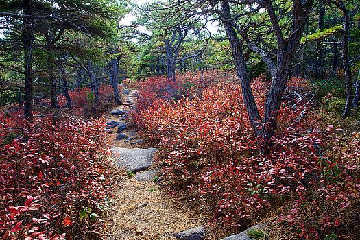 Acadia National Park by John Daly