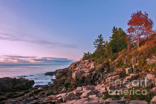 Acadia by Sharon Seaward