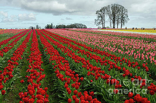 Acres And Acres Of Beauties by Nick Boren