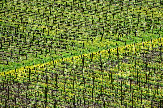 Donna Blackhall - Acres Of Vines