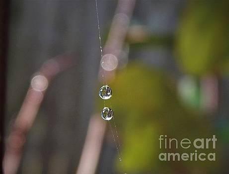 Acrobat Dew Drops by Dee Winslow