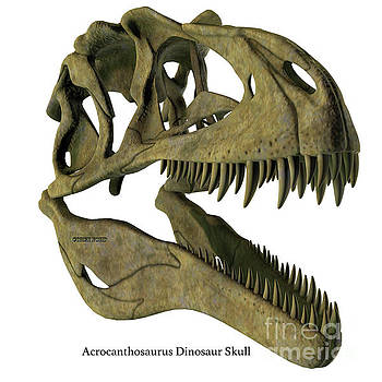 Acrocanthosaurus Skull with Font by Corey Ford
