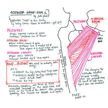 Adductor Group Part 1 by Julie Read