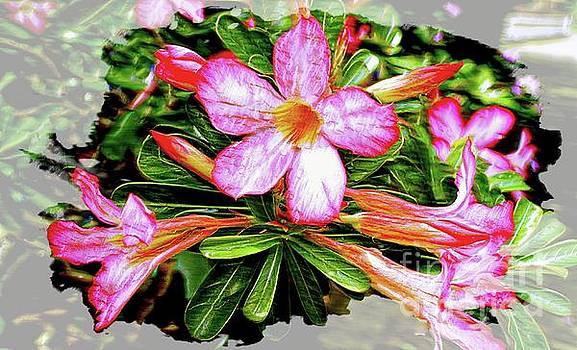 Adenium Asian Flower by Ian Gledhill