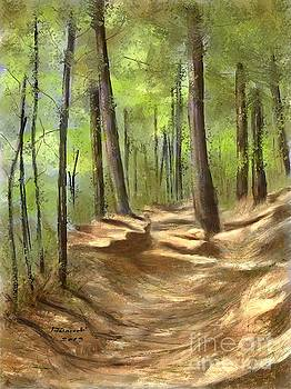 Adirondack Hiking Trails by Judy Filarecki