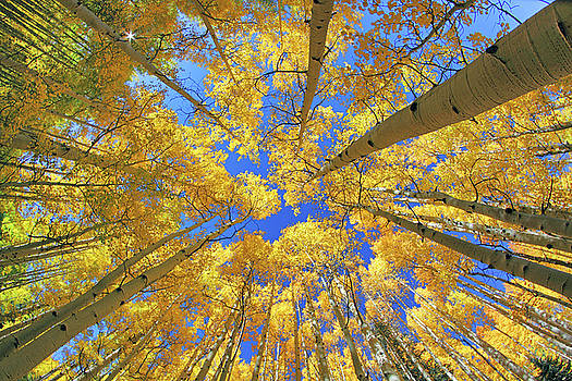 Jason Politte - Admiring Aspens - Colorado - Autumn