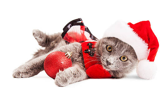 Susan Schmitz - Adorable Christmas Kitten Over White