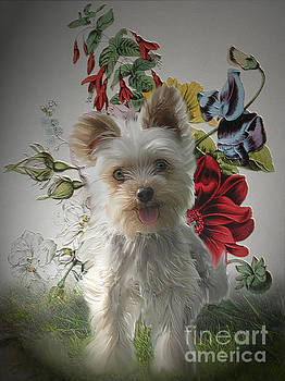 Adorable Yorkie and Rose Photo Painting by Heinz G Mielke