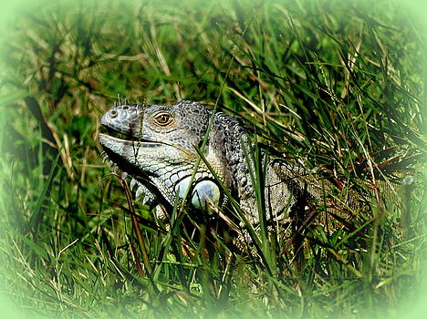 Adult Green Iguana by Ines  Ganteaume
