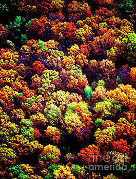 Aerial Farm Tree Tops Fall Ff by Tom Jelen