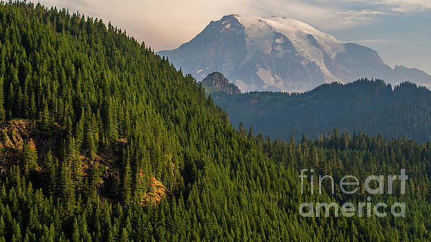 Aerial Forests Lead to Mount Rainier by Mike Reid