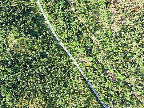 Aerial view of road through a palm tree forest by Lukasz Szczepanski