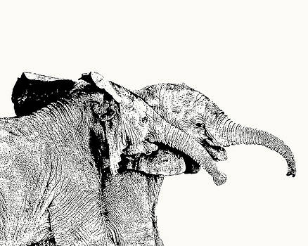 Affectionate Young Elephant Pair by Scotch Macaskill