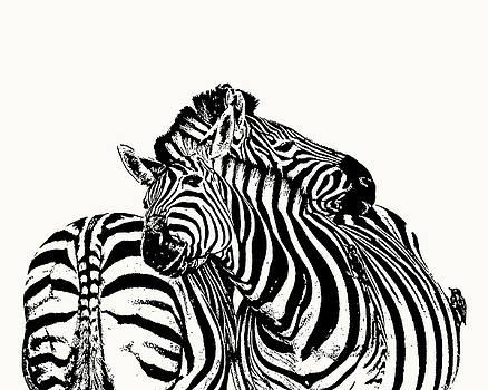 Affectionate Zebra Pair by Scotch Macaskill