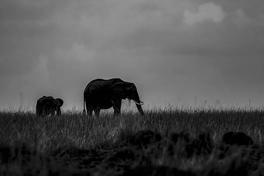 Africa Grass Land by Ramabhadran Thirupattur