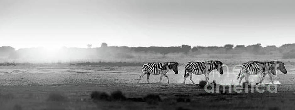 Tim Hester - Africa Sunset Landscape Black And White