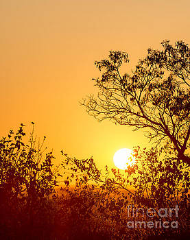 Tim Hester - Africa Sunset