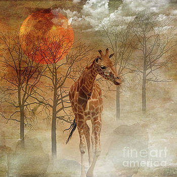 African Dream by Barbara Dudzinska