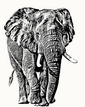 African Elephant Bull, Full Figure by Scotch Macaskill